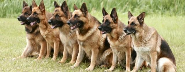 超大型犬から小型犬まで、犬のことならご相談ください!
