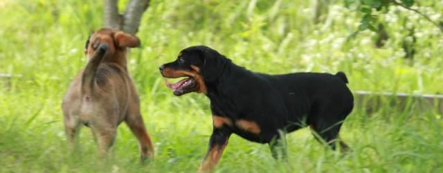 仔犬の頃に色んな体験をさせる事で 安定した性格の犬に育ちます。