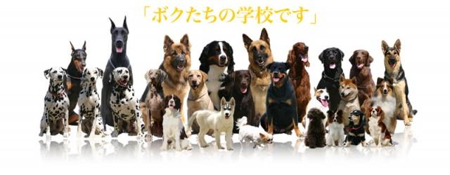 預託訓練からしつけ教室など・・飼い主さんとワンちゃんに合った方法でトレーニングいたします。