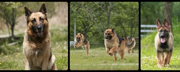 2017年 日本訓練チャンピオン決定競技会  2018年 愛知県嘱託警察犬認定 2018年 三重嘱託警察犬認定     2017年 愛知県警察本部 […]
