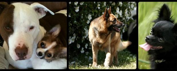 プロが愛犬のお世話をいたします、安心しておでかけ下さい。 対象 : 小型犬~超大型犬(ワクチン接種済みの犬に限る) 期間 : 半日~長期 (ご相談に応じます。) 犬種 : 全犬種 24時間スタッフ常駐 送迎 […]
