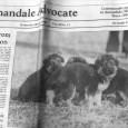 訓練士の仕事は訓練以外にも、体調管理として毛の手入れをしたりシャンプーをしたり、体調の悪い犬を獣医さんに連れて行ったり、
