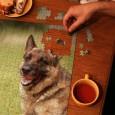 警察犬訓練士の朝は、飛び起きるとまず犬舎へ突進です。扉を開けると、匂いの確認。異臭がしないか?下痢便とか嘔吐とかの異常な匂いがしないか確認します。