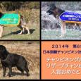 2014年10月に長野県霧ヶ峰にて行われた、  日本訓練チャンピオン決定競技会で入賞した子達を代表犬ページにアップしました。