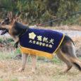 2018年度三重県警察嘱託犬にスピカくんとアルフちゃんが認定されました。