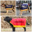 2019年度の愛知県警、三重県警嘱託犬認定されましたので代表犬のページにアップしました。 これから1年間県警の捜索活動や地域活動などに協力いたします。 どうぞ彼らの活躍を応援よろしくお願いいたします!