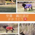 2020年度の愛知県警、三重県警嘱託犬に4頭認定されましたので代表犬のページにアップいたしました! また、2019年秋に開催された日本訓練チャンピオン決定競技会にて入賞した2頭もアップいたしております。 みんなよく頑張り […]